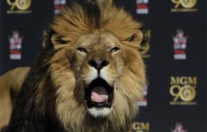 MGMs_Leo_lion