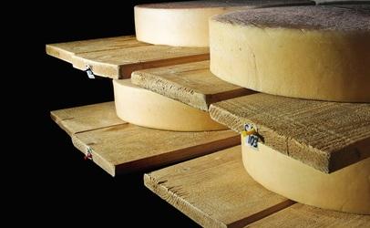 cheese-shelf-406