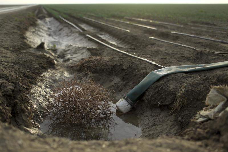 Tumbleweed is seen at an irrigation channel on a farm near Cantua Creek