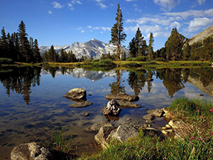 high_country_near_tioga_pass_yosemite_national_park_california