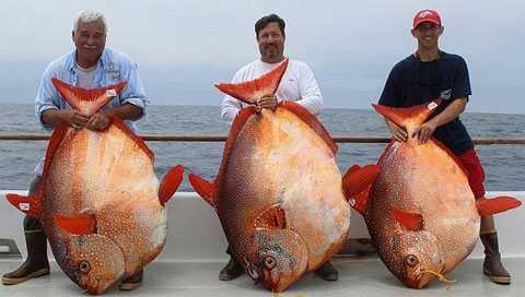 картинки редких рыб
