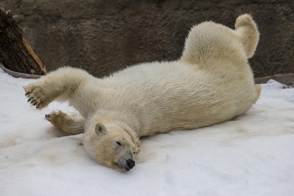 Image result for зоопарк сан диего официальный сайт