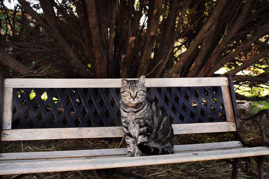 I-photograph-cats-at-the-largest-no-kill-cat-sanctuary-in-California-800-cats11__880