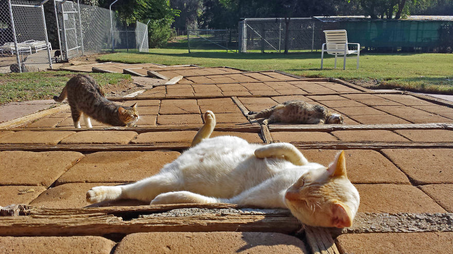 I-photograph-cats-at-the-largest-no-kill-cat-sanctuary-in-California-800-cats1__880