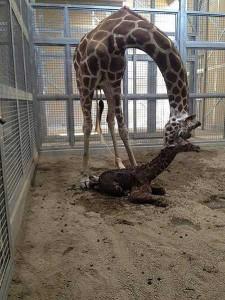 ФОТО: Fresno Chaffee Zoo