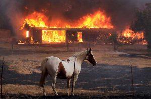 В двух округах Калифорнии введено чрезвычайное положение