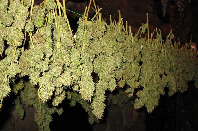 правила выращивания марихуаны
