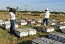 пчел в США