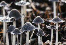 психоделические грибы